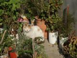 Village cat with flower pots