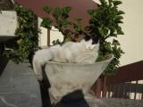 Museum cat