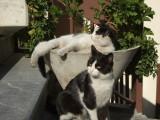 Museum cats