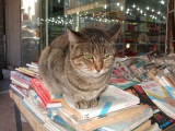 Bookworm cat in the bazaar