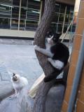 Bizarre cats in the bazaar