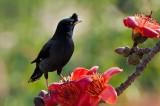 Widelife Birds  2011