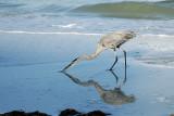 Indian Shores FL 2011
