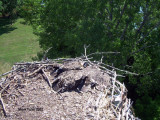 Three at this nest