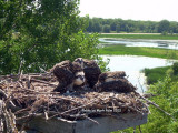 Life at the top of the nest.
