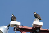 The other two are out on the lights at the baseball field.