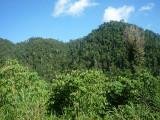 Lush hills at Halmahera