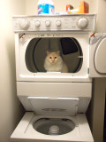 Milo in the Dryer_2.jpg