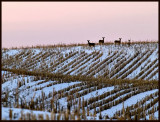 Dusk Falling on the Day and Deer