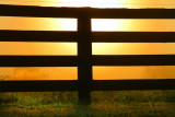 A Fence at Sunrise