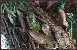 L'arbre aux deux cœurs...  Celui d'Enrico et celui du temps
