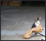 Toujours à distance les chats observent...