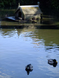The duckpond at Worth