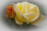 rosebud and mumma