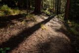 Deep Woods Trail