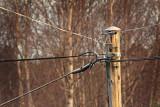 Telephone wires, Tjärnö