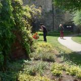 Plant-inspection - St. Mary's Church, Bury St. Edmunds