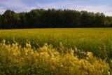 Waving fields #2 - near Havstensund on the Swedish west coast