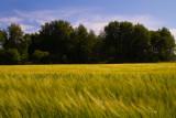 Waving fields #1 - near Havstensund on the Swedish west coast