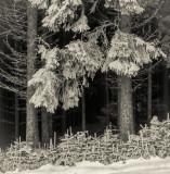 Winter - Remmen