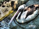 Pelican 03-Dramatic Tone Filter.jpg