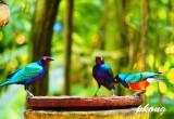 Starlings 02.jpg