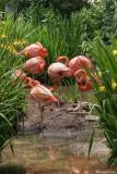 Flamingos - Philedelphia Zoo