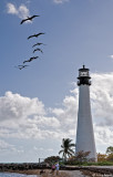 Pelicans Over Lighthouse