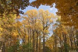 Valley Forge National Park - Fall