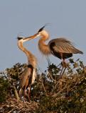 Great Blue Heron Couple 3