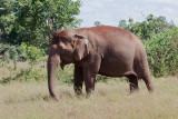 Elephant sanctuary Cambodia