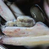 Seafood at South-East Asian markets