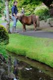 Japanese Gardens, Irish National Stud  12_d90_DSC_0116
