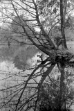 Little lake in Parco Sempione