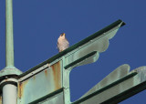 Peregrine: facing west/looking south on upper south pointing backspar of Viking boat