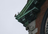 Peregrine on NW corner ledge above west face of clock