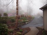 P3272917 Foggy Morning Serenaders