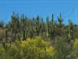 P5083499 On the Way to Flagstaff, Arizona