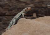 P5133807 Little Lizard