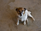 P6044053 Vendor's Sweet Dog