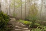 P1030706 Steps in the Morning Fog