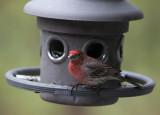_MG_7018 I love rainy days...for bird shooting!
