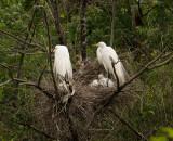 P1040303 Nesting Birds