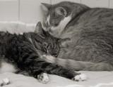 P1000624 Kitty Love