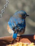 P1000676 Pretty Blue