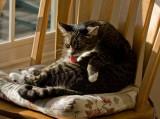 _MG_0193 Sunbather