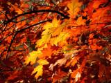 Autumn Leaves New York City Central Park