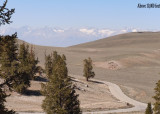Ancient Bristlecone Pine Forest (ABPF)