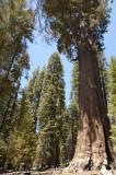 04 General Sherman Tree 03.jpg