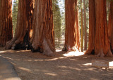 06 The Parker Group of big trees.jpg